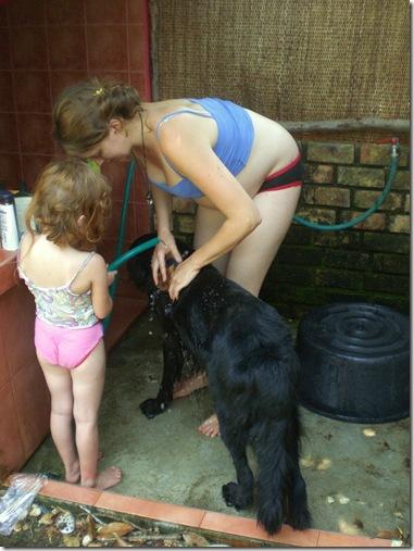 10 dog wash