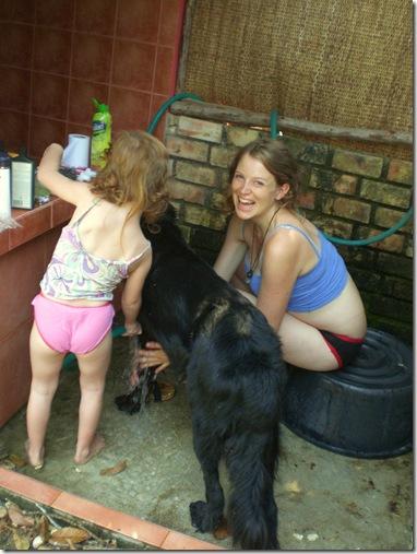 09 dog wash