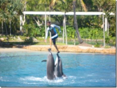 16 seaworld dolphin show