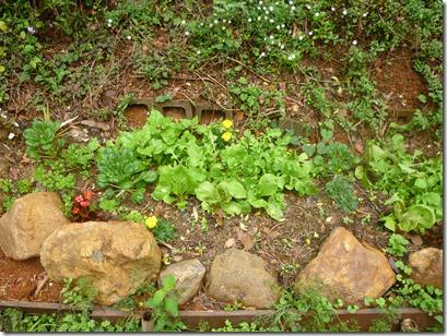 49 garden 4 weeks