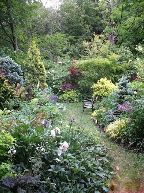 Mid June viewe punctuated by peonies, sib. iris, allium