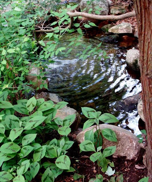 garden rr rr p pond tom-1.jpg