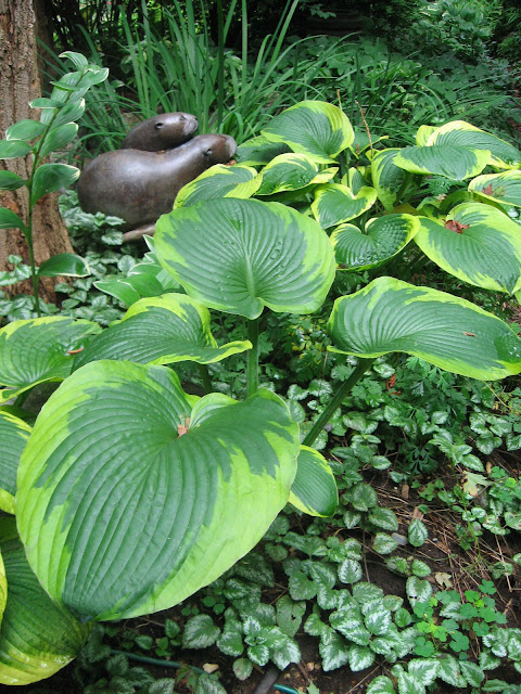 MP, OTTERS , HOSTA AND LAMIASTRUM.jpg