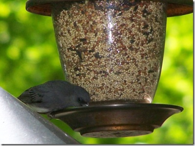 bird at feeder