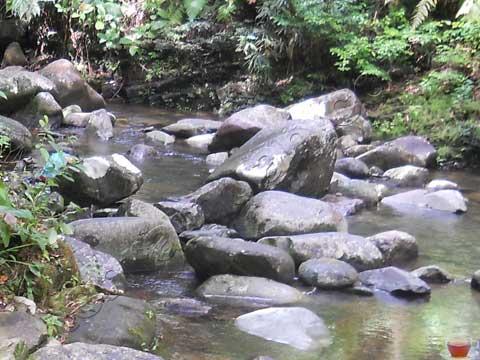 Matang Family Park 8