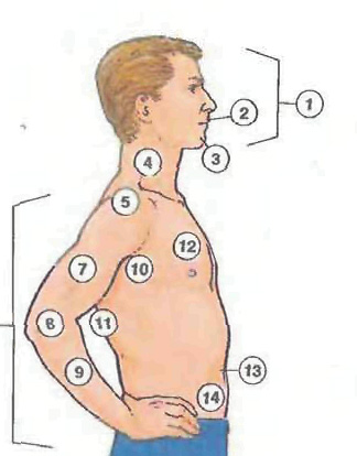 human body1 Human body: Body, Head, Eye, Hand, Foot; Internal Organs people english through pictures