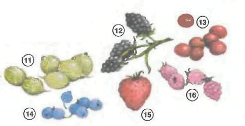 Berries <!  :en  >Fruits<!  :  > things english through pictures english through pictures