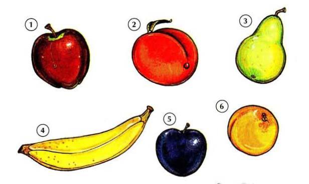 FRUITS 1 <!  :en  >Fruits<!  :  > things english through pictures english through pictures
