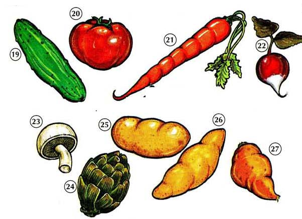 VEGETABLES 3 <!  :en  >Vegetables<!  :  > food 