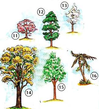 TREES%2C%20FLOWERS%2C%20AND%20PLANTS 3 <!  :en  >Trees, Flowers, Plants<!  :  > things english through pictures english through pictures