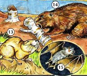 13. gopher  14. beaver  15. bat