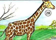 28. giraffe