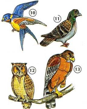 BIRDS%20AND%20INSECTS 6 <!  :en  >Picture Dictionary Online<!  :  >