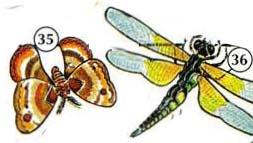 35. moth 36. dragonfly