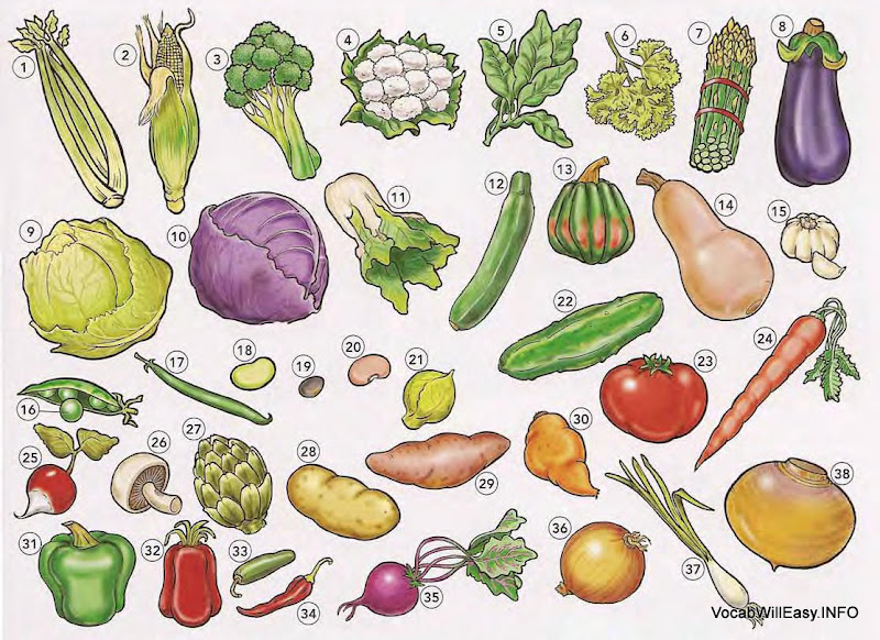 VEGETABLES <!  :en  >Vegetables<!  :  > food 