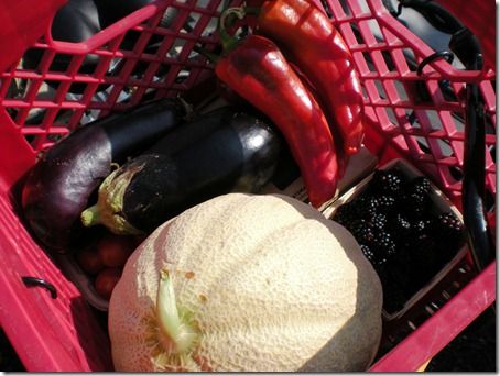 We also bought a couple eggplant and some sweet Italian red peppers