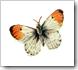 vlim_grateful_butterfly4