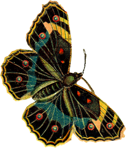 [vlim_grateful_butterfly2[7].png]