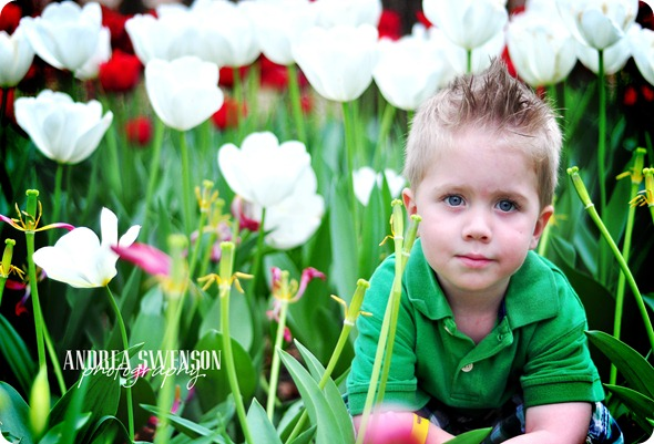 Isaac and Tulips cr