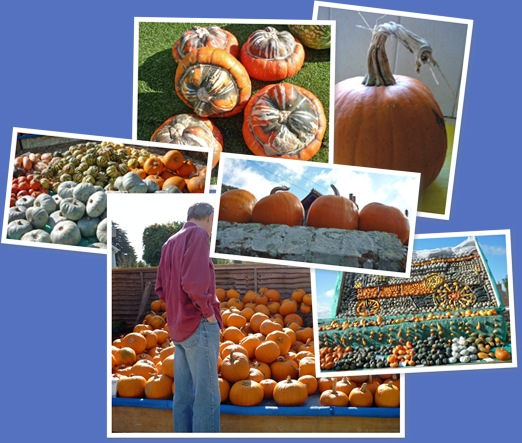 View Pumpkins