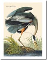 john-james-audubon-great-blue-heron