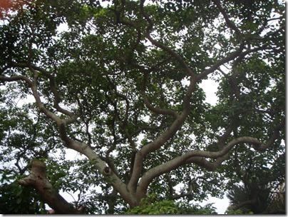 the hallow tree