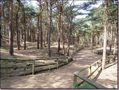 Pinewoods