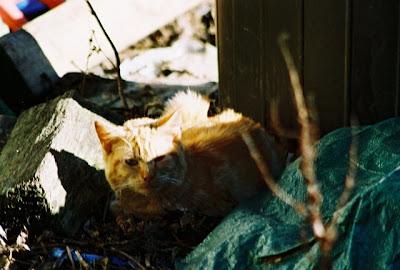 Photo orange tabby cat hiding