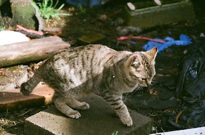 Feral Kitten Photo, Gort The Cat
