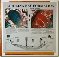 carolina bay poster