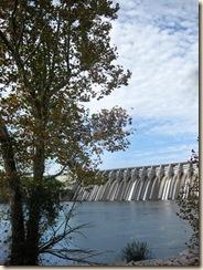 Dam Tree