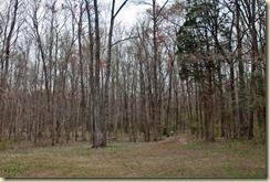 surrounding woods