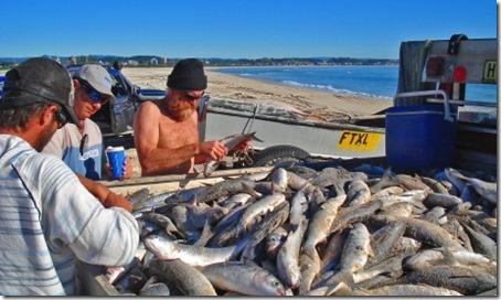 Pesca da Tainha em Kirra. Foto: Carlos Portella