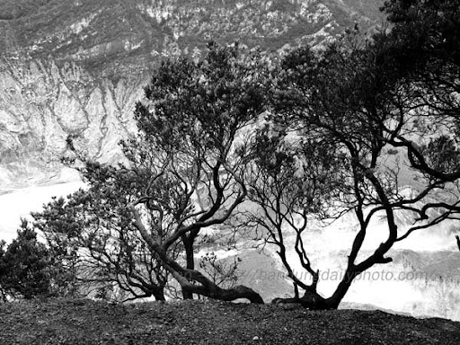 black and white pictures of trees. lack and white photographs of