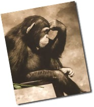 Thinker-chimp