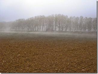 Nieblas rasantes