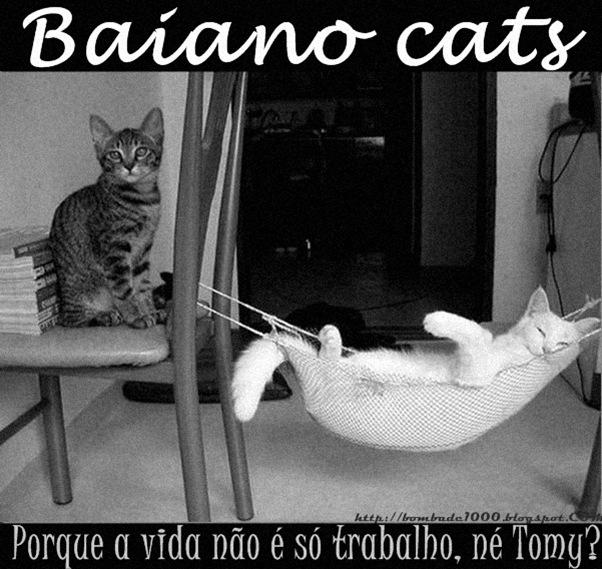 Gato Baiano