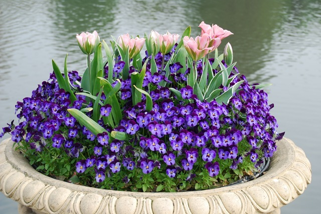 Kew tulip urn