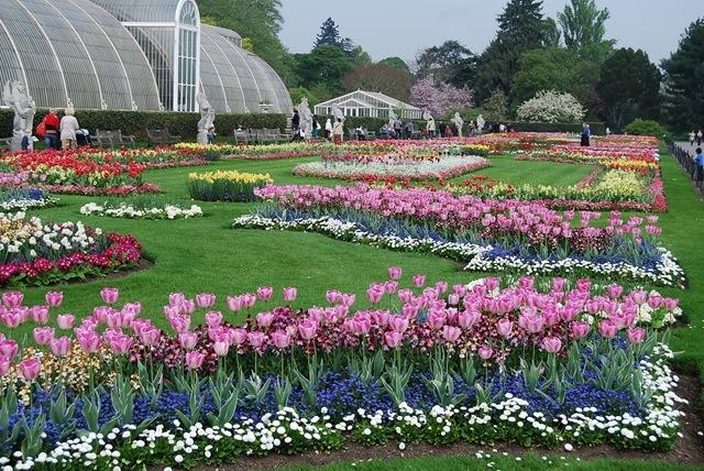 Kew tulip beds (2)