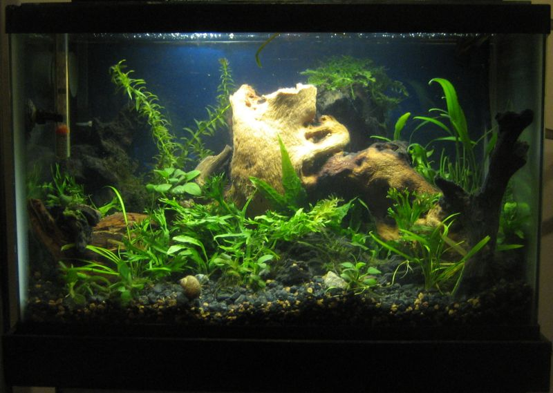 My Aquariums Pet Turtles And More
