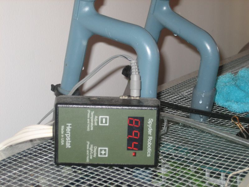 herpstat proportional thermostat used with basking pet turtles
