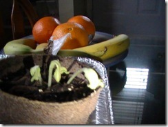 Cantaloupe April 11_3