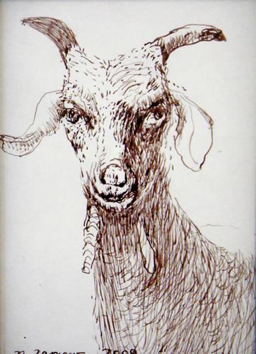 Goat Nr20
