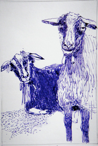 Goat Nr24