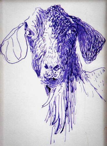 Goat Nr29