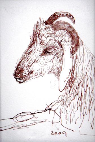 Goat Nr25