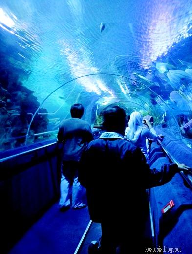 aquaria 128