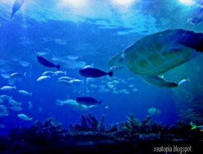 aquaria 144