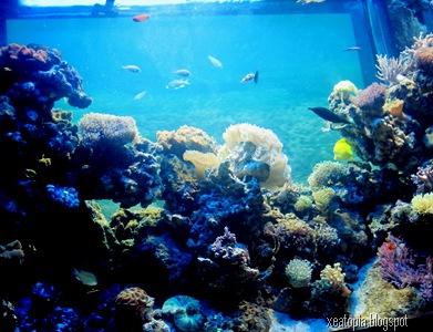 aquaria 172