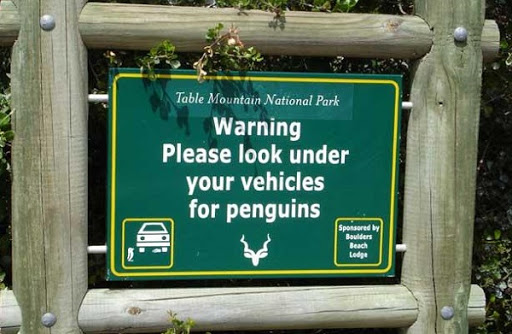 Car Penguins?